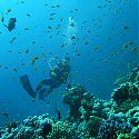 Scuba Diving, The Lighthouse, Dahab, Red Sea, Egypt.