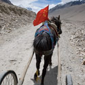 On route to Everest Base Camp by pony & trap, Tibet.