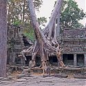 Preah Khan, The Temples of Angkor, Cambodia.