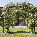 Apple Archway