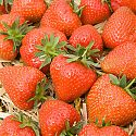 Strawberries - Fragaria x ananassa 'Christine'